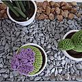 Cactus en crochet