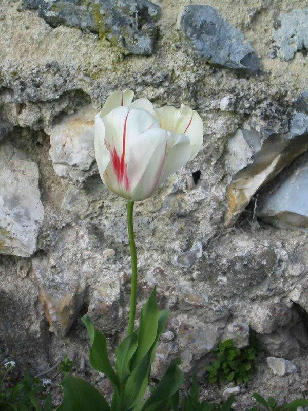 Chateau de Villandry Pâques 2004