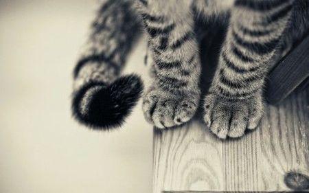 cats-jvymofgax-142633-530-331_large