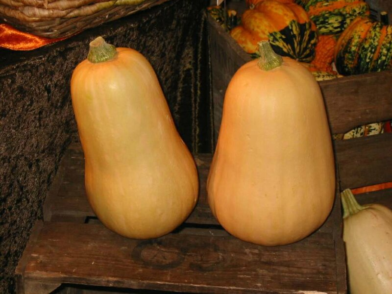 Courges_butternut_01