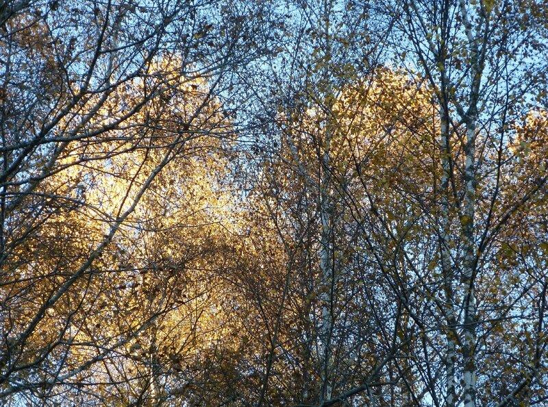 Graphie d'automne