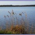 Lac Soustons 1204158