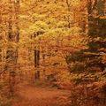 News d'automne