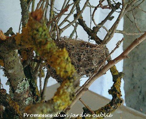7 nids