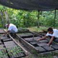 Plantation des graines récoltées pour reforestation