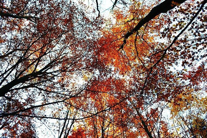 arbresdorés