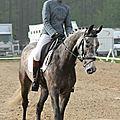 Jeunes chevaux - jardy