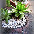 shou sugi ban et succulentes
