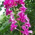 orchid_40