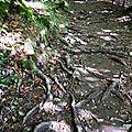 Parc national du biograd ( monténégro )