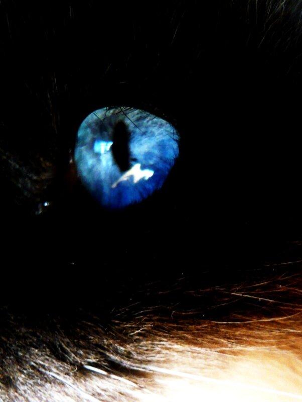 Reflets dans un oeil bleu photo de chats portraits for Reflet dans un miroir
