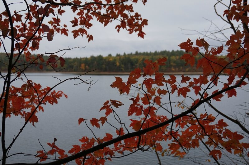 Walden Pond (16)