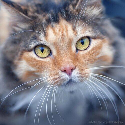 chats multivcolore - Copie - Copie