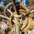 guirlande d'aiguilles de pin yurtao