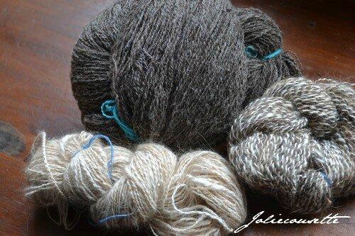 shetland angora