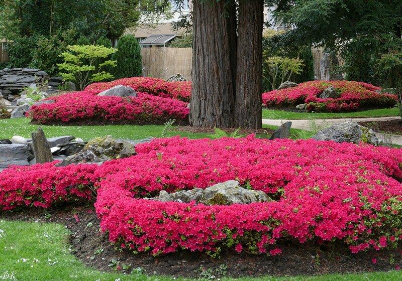 Jardin japonais 1