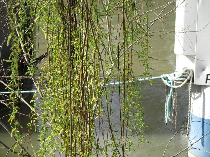 pont+parapluie+magnolias 038