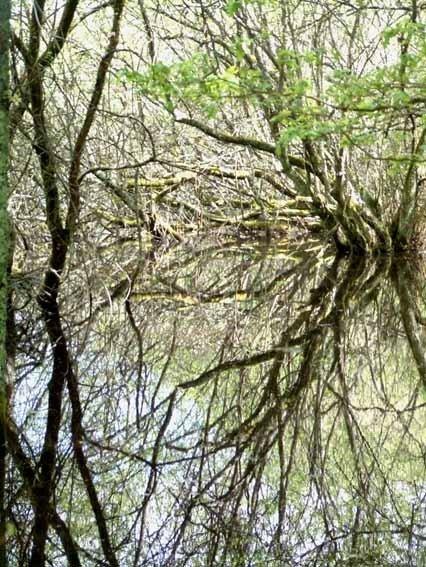 Reflet mare de sologne3 photo de photos quand l 39 eau for Miroir reflet sens 90