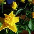 Bouquet de soleil