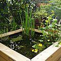 Bassin en terrasse