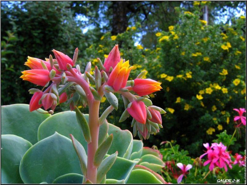 Hammamet capital de splantes aromatique et m dicales hammamet city - Plante grasse a fleur rose ...