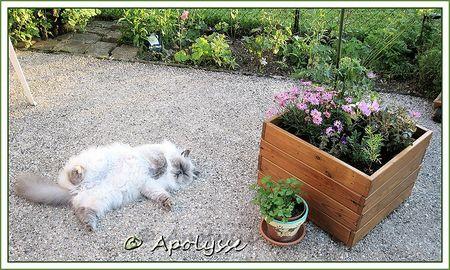 Ulysse au jardin et bac