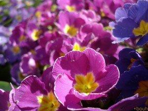 printemps_08_040