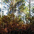 Feuillages automne 2811156
