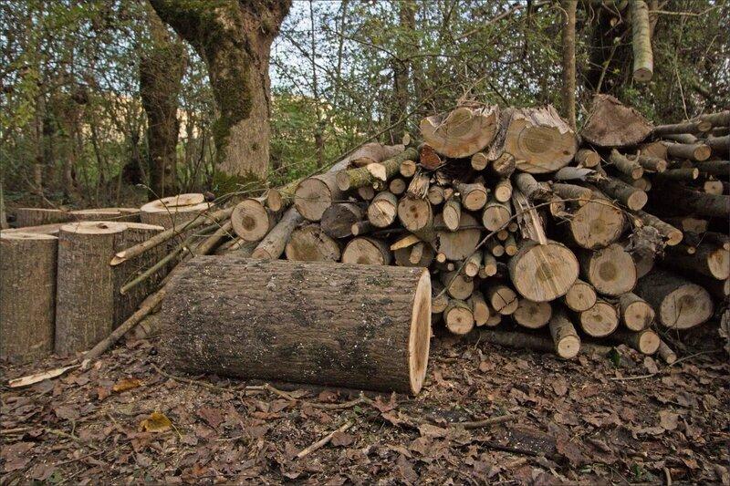 Galuchet chantier tas de bois 151115