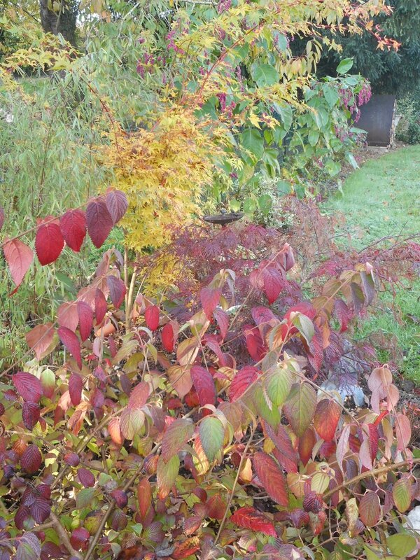 Viburnum et Acer palmatum Sankokaku et dissectum Garnet