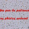 Z-9837 Fête du Flobart à Wissant 31 août 2014