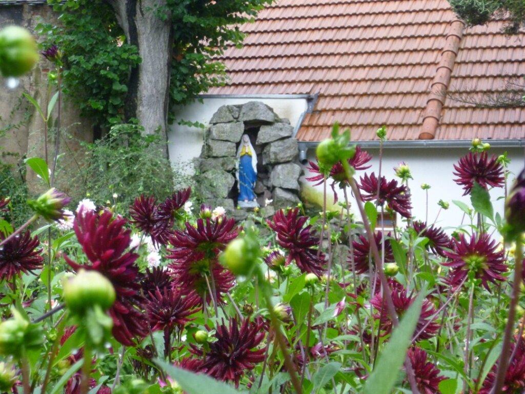 jardin du dahlia1