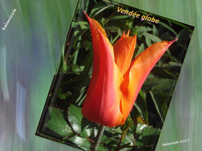 balanicole_2017_05_le printemps des tulipes_52_vendée globe fermée