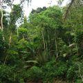 Forêt autour du campement