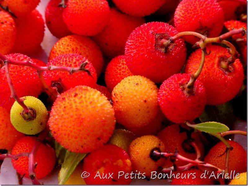 Fruits légumes et fleurs d'automne (8)