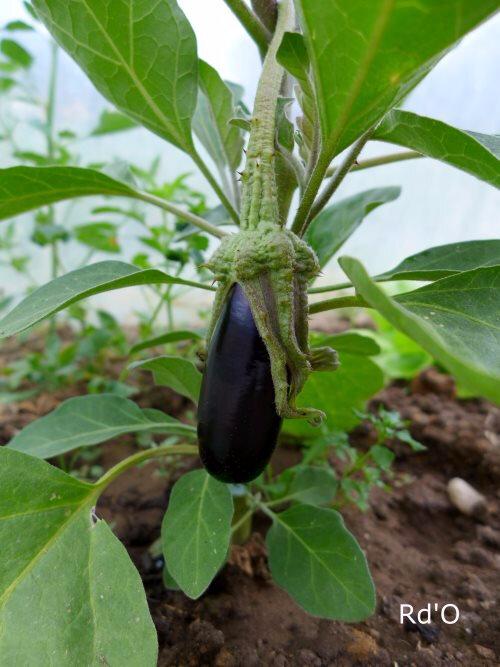 jardin-2017-blog-06