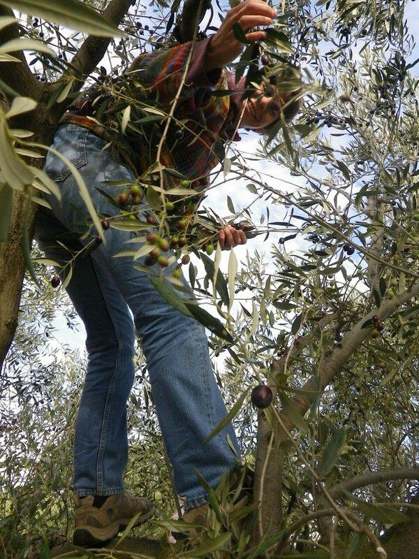 Anne dans l'arbre