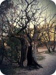 2_arbre_a_sorci_re