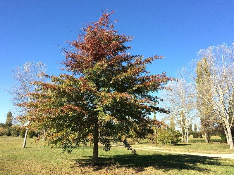 Arbres automne 2015