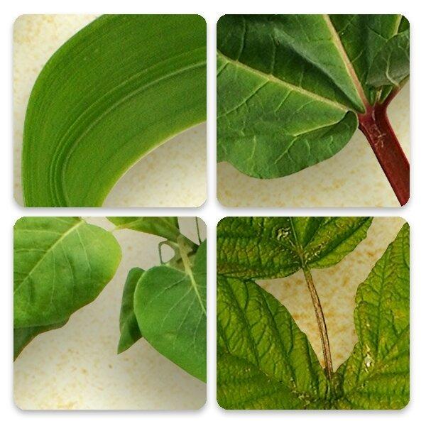 GBE_Garden_foliage_CU_zoom