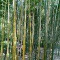 Jardin botanique de Kyoto