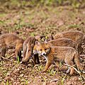 2014-05-30 LUX-1049