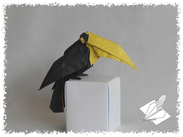 Toucan 002 blog