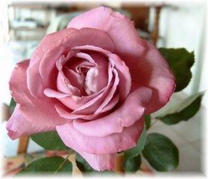 rose-f10