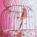 Cage  oiseaux de dco
