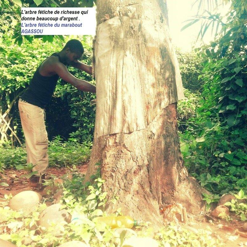 L'arbre fétiche du marabout AGASSOU