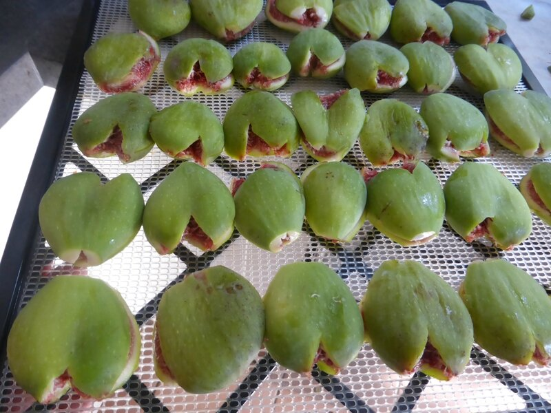 10-figues (9)