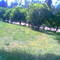 petit parc meknes