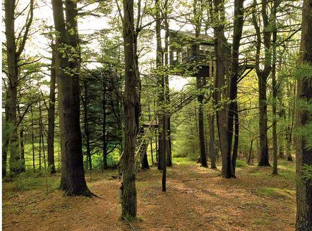 cabane_dans_l_arbre