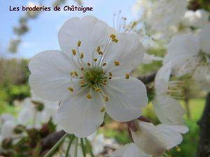 cerisier (4)